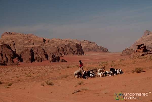 Shepherdess Takes Care of Her Goats in Wadi Rum, Jordan
