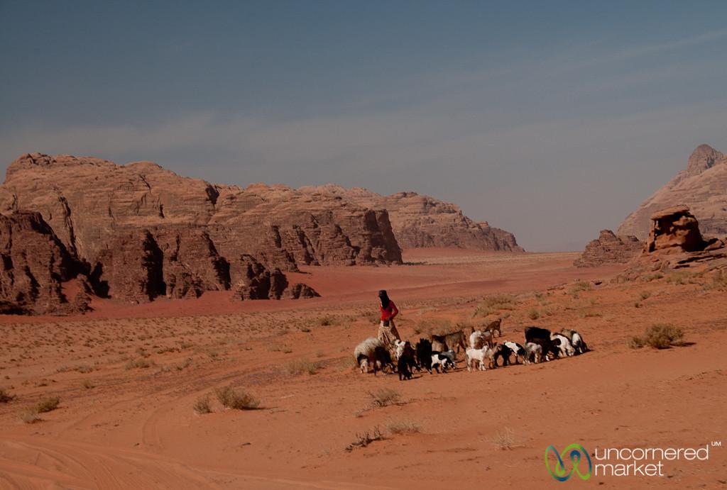 Shepherdess Takes Care of Her Goats in Wadi Rum, Jordan