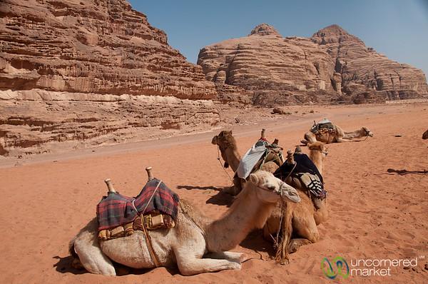 Camel Resting Spot - Wadi Rum, Jordan