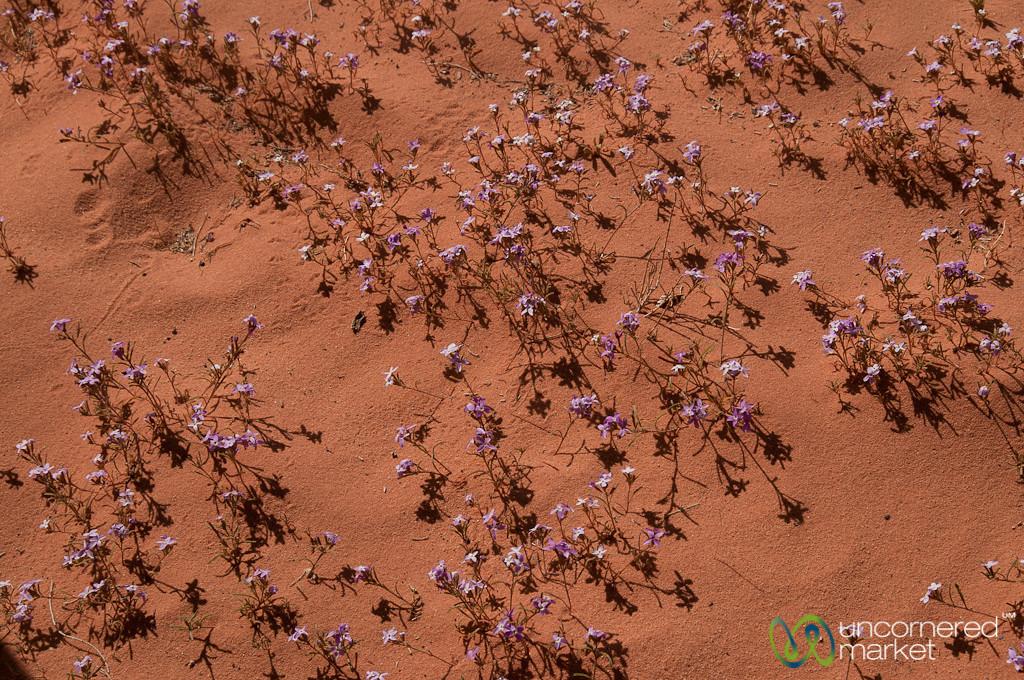 Flowers in the Desert - Wadi Rum, Jordan