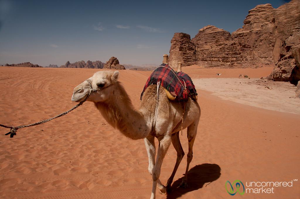 Come Along Camel! Wadi Rum, Jordan