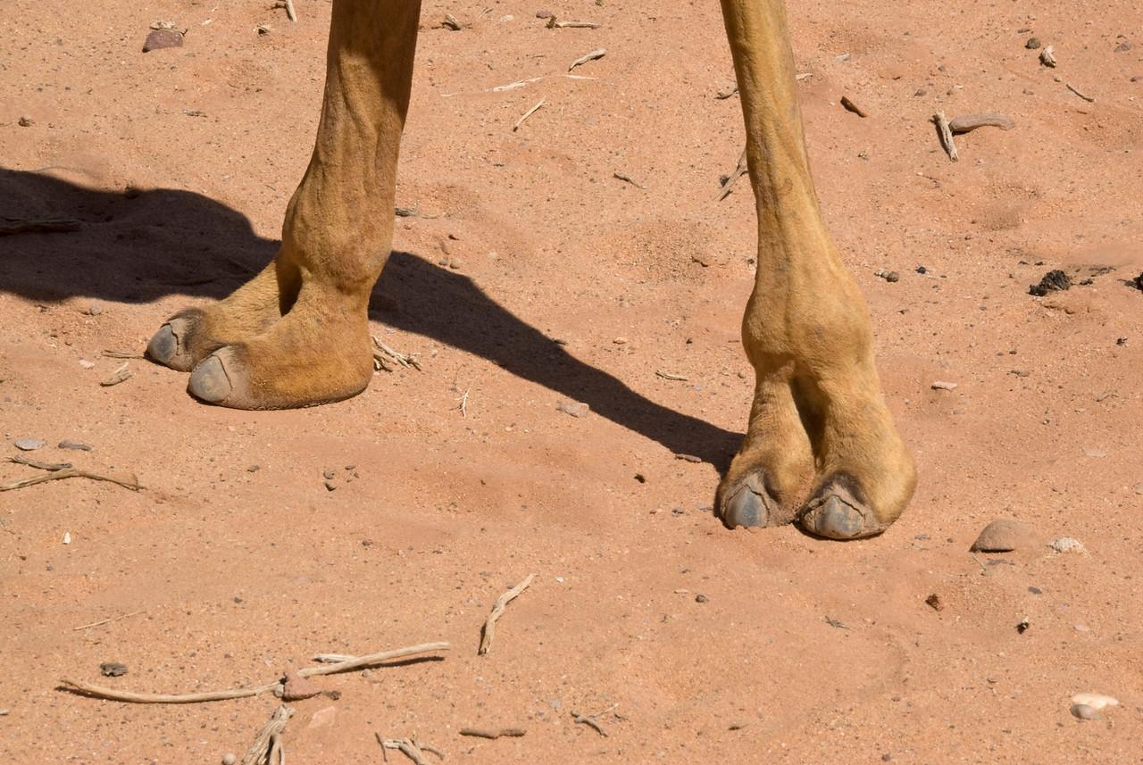 Camel toes in Wadi Rum, Jordan