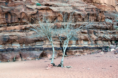 Dead Trees in Wadi Rum, Jordan