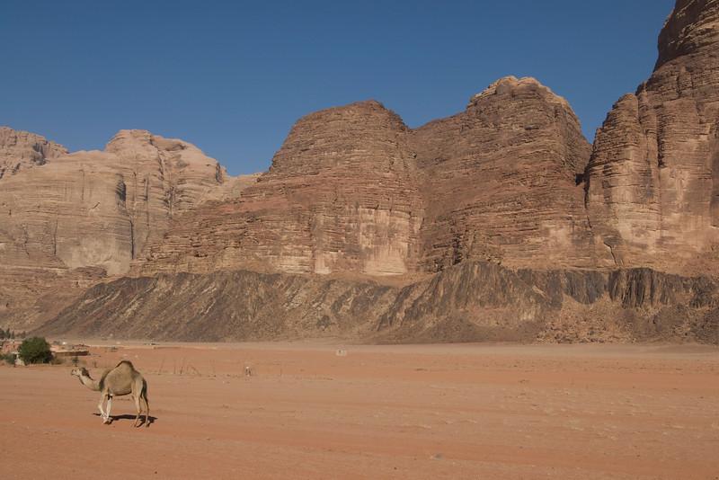 Camel and rock formation in Wadi Rum, Jordan