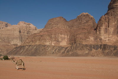 Camel and rock formation in Wadi Rum, Jordan