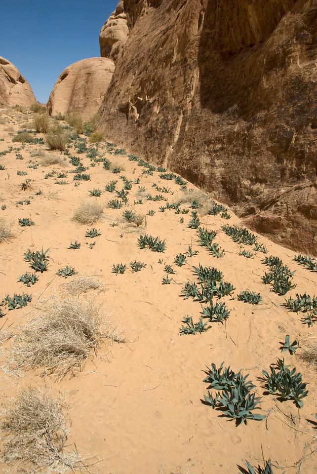Desert and rock formation in Wadi Rum, Jordan