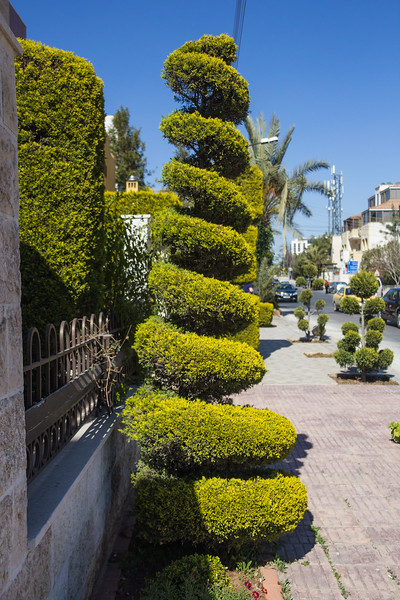 Topiary in the Middle of the Sidewalk (©simon@myeclecticimages.com)