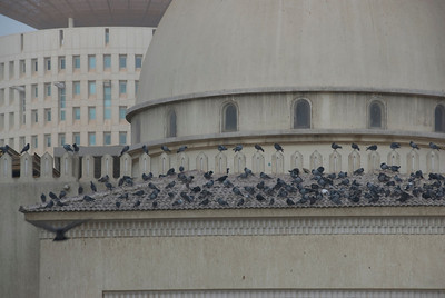Birds on Mosque - Kuwait City, Kuwait