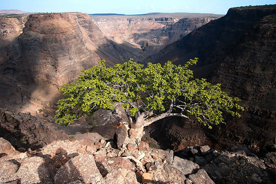 Tree with a great view. Djibouti.