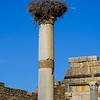Volubilis--basilica