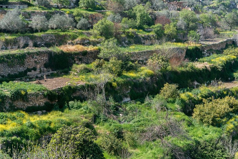 Palestine: Land of Olives and Vines