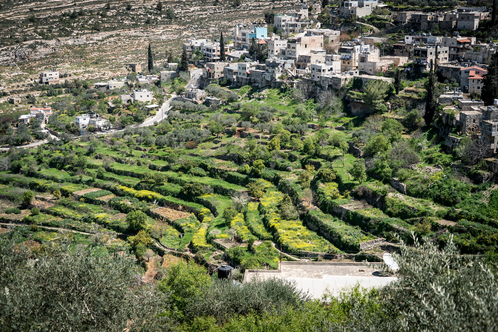 Palestine: Land of Olives and Vines – Cultural Landscape of Southern Jerusalem, Battir