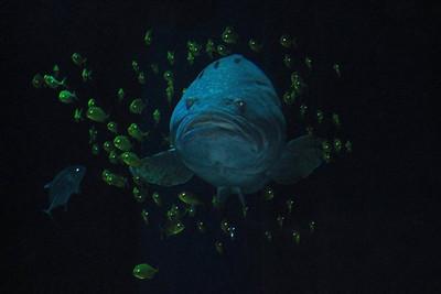 Fish in Dubai Aquarium - Dubai, UAE