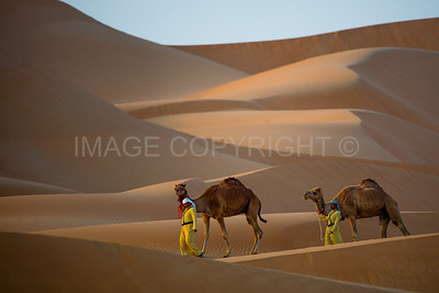 Camels in the Dunes