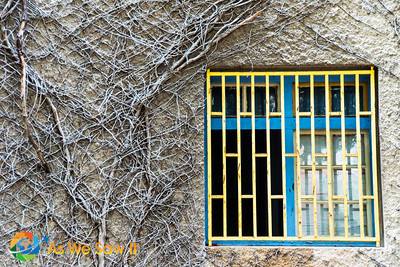 Window with vines along Balfur
