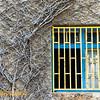 Window with vines along Balfur