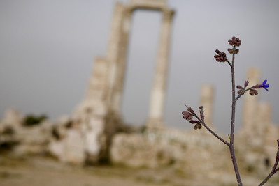 Artsy shot of tiny purple flowers at the Amman Citadel, Jordan