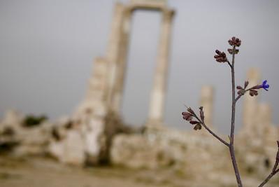 Artsy shot of tiny purple flowers at the Amman Citadel, Jordan