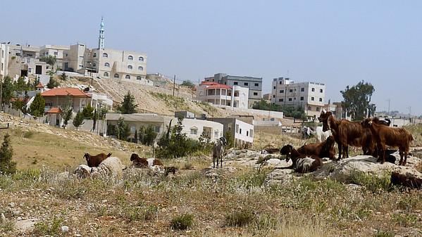 Jordan countryside as we pass through cities.