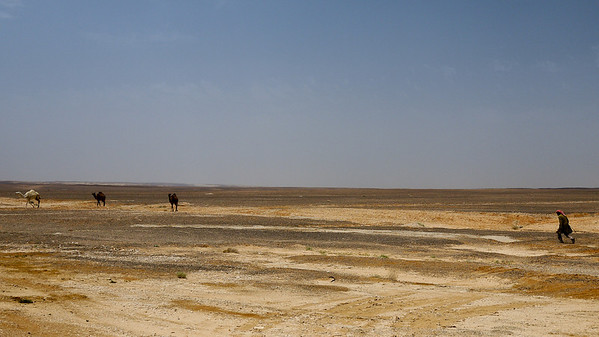 A Bedouin man treks across the desert after his camels in Jordan.
