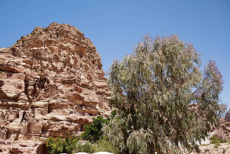 A pretty tree against the red rocks in Petra, Jordan.