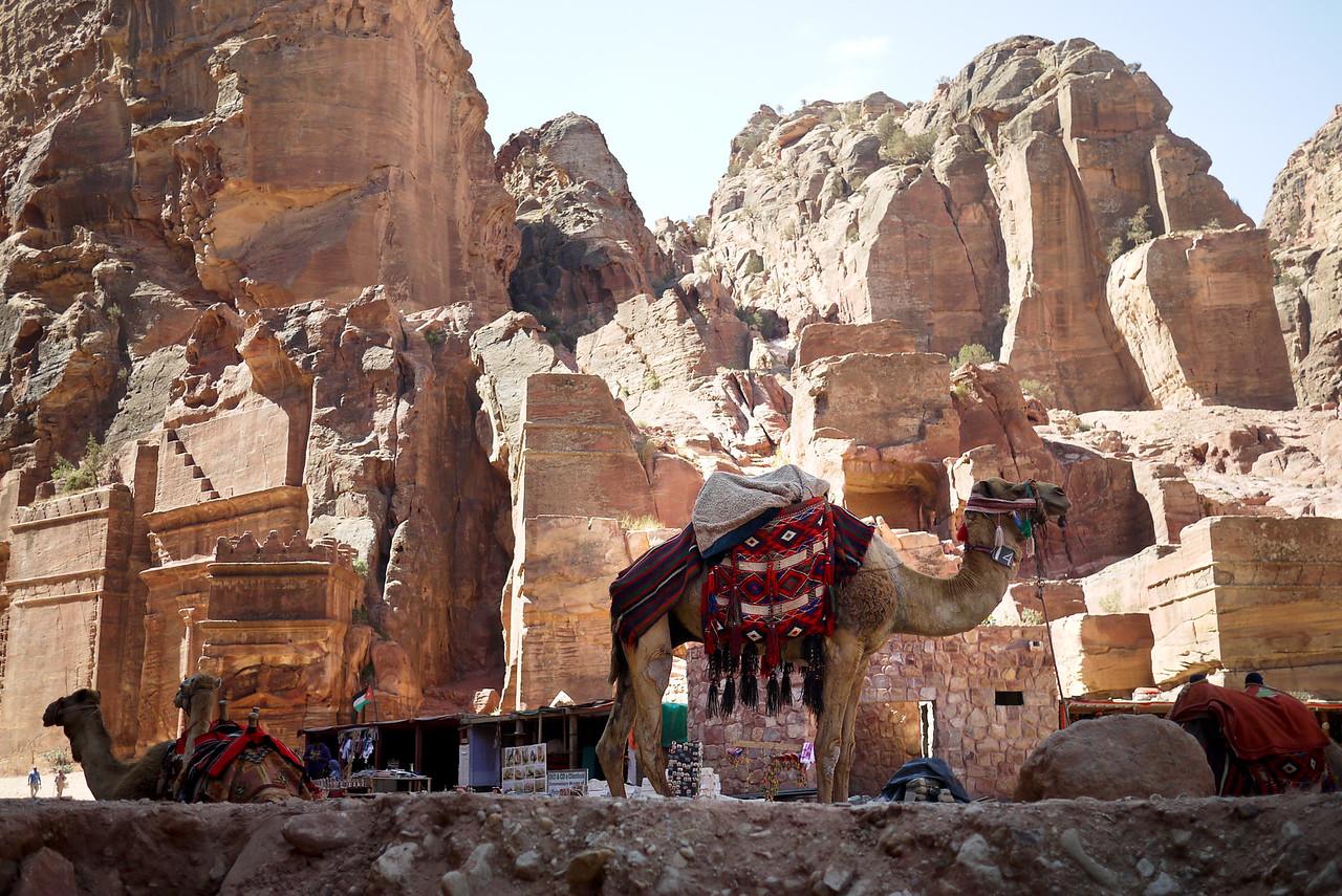 A tethered camel near the Street of Facades in Petra, Jordan.