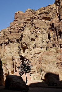 A lone tree stands against the tall rocks, the bench is a comparison for the size of Petra, Jordan.