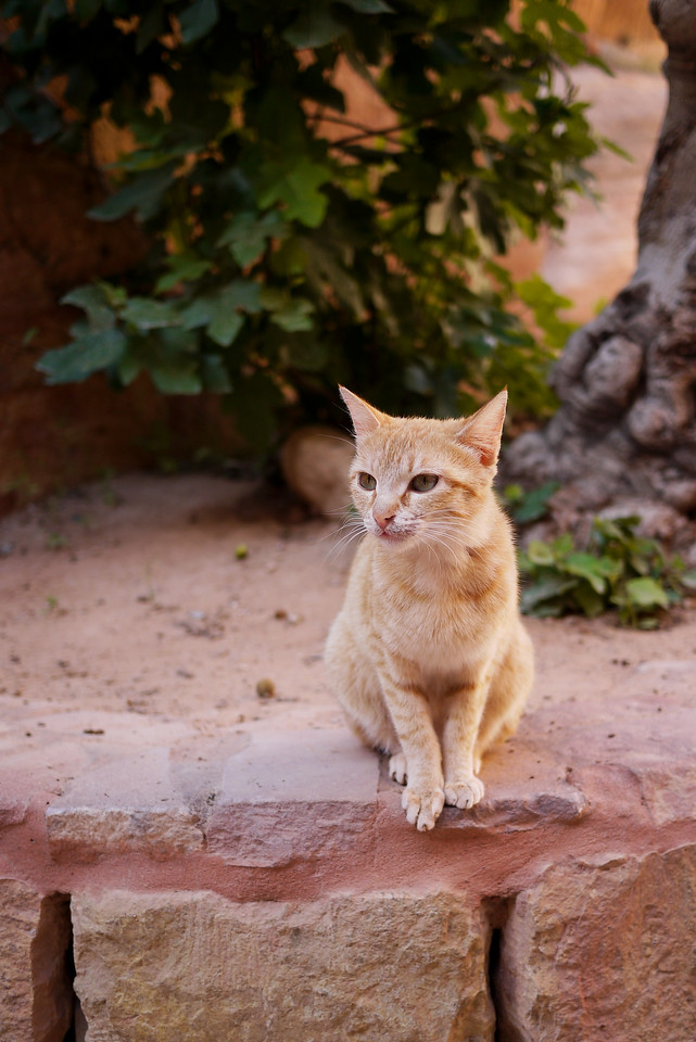 A Petra cat in Jordan! And he matches :).