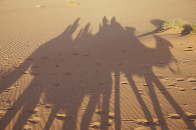 Camel shadows in Wadi Rum desert, Jordan