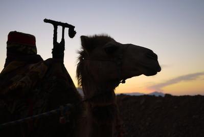 Camel profile at sunrise in Wadi Rum, Jordan