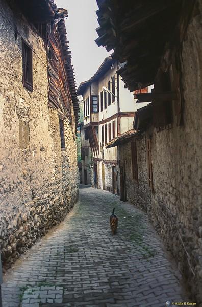 Dog in alley<br /> Safranbolu, Turkey