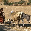 Children / Donkey - Harvest<br /> South East Anatolia, Turkey