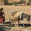Children / Donkey - Harvest<br /> South East Anatolia, Turkey