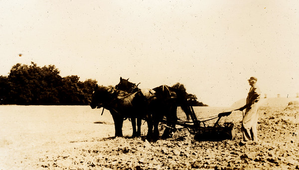 A plow team turn the soil at Richardson's in the 1920's