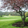 JIM VAIKNORAS/Staff photo The 18th green at Middleton Golf Course on a warm spring morning.