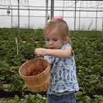 Picking strawberries and misc. photos from trip to Midland, TX.