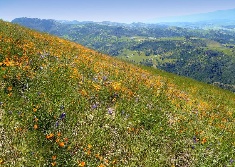 GRASS MOUNTAIN FLORA