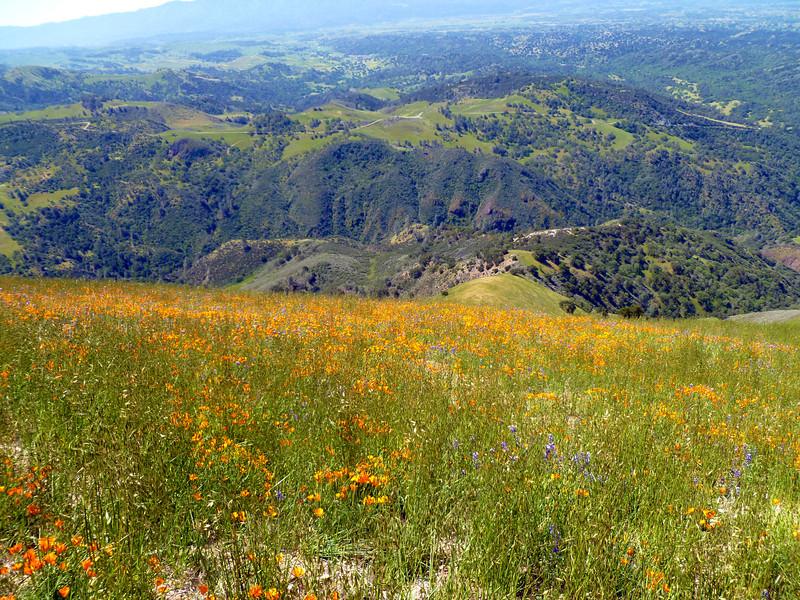 GRASS MT. IN APRIL