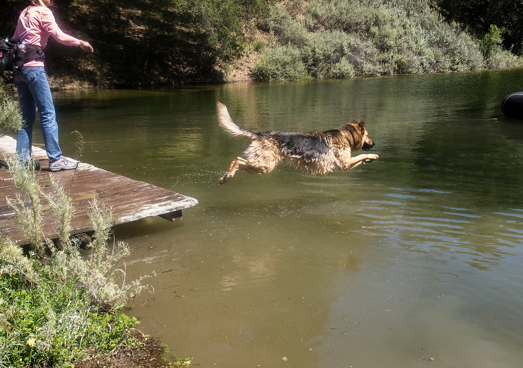 PETE'S DOG, CODY, TAKES ADVANTAGE OF AN OPPORTUNITY FOR AN AFTERNOON SWIM
