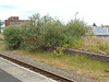 The old platforms with loads of overgrown trees and bushes slowly <br /> <br /> taking over