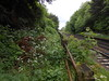 Pic by Liz <br /> <br /> Looking at the now long overgrown platforms at Derby end