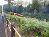 Pic by Liz <br /> <br /> Harry Needle Rail Comany class 20's bring up rear between tanker <br /> <br /> Barrier wagons