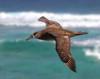 Albatross_BF flying TAB10MK4-8261
