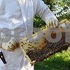 Beekeeper Matt Anderson of Bee Paw Honey in Malta holds a honey super frame with honeybees on it. Anderson has three honeybee hives at his farm and helps remove swarms of bees from residences in DeKalb County.