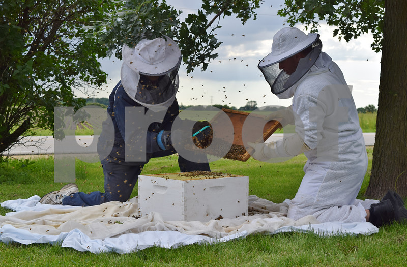 Marlin Anderson, left, and his son Matt Anderson, right, remove a swarm of bees from a tree in the front yard of Gretchen Freise and Jackson Kettner's house in Genoa. Matt Anderson, a third-generation beekeeper, has three honeybee hives on his farm and removes swarms of bees from residences around DeKalb County.