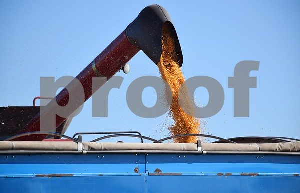Corn kernels are augered into a grain cart after being harvested from Vince Faivre's field in DeKalb on Oct. 21.