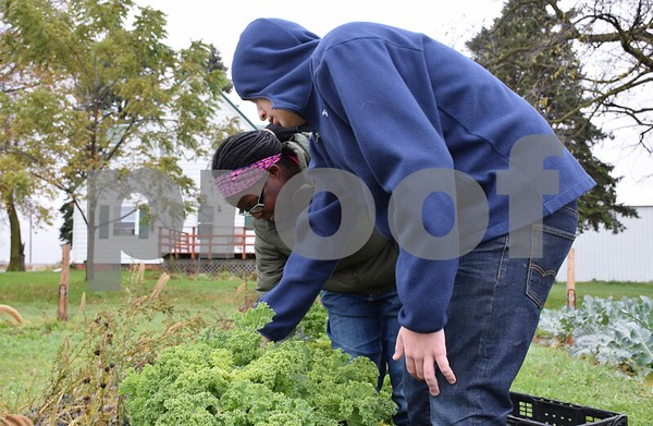 Debra Johnson (left) and Christian Krider, students with Life School, Sycamore Community School District 427's transition program, pick kale at DeKalb County Community Gardens' Walnut Grove Vocational Farm. The farm received $13,100 from 100+ Women Who Care DeKalb/Sycamore in February. The money was used to purchase seeds and handicap-accessible gardening tools.