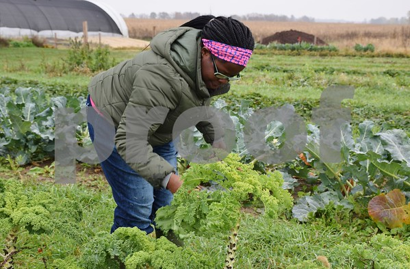 Debra Johnson, a student with Life School, Sycamore Community School District 427's transition program, picks kale at DeKalb County Community Gardens' Walnut Grove Vocational Farm. The farm received $13,100 from 100+ Women Who Care DeKalb/Sycamore in February. The money was used to purchase seeds and handicap-accessible gardening tools.