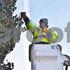 Andy Siebrasse, a laborer with the Sycamore Public Works Department, decorates a tree in downtown Sycamore during the early morning hours of Nov. 10. This year, the Sycamore Public Works Department placed more than 600 strands of lights on 69 trees, hung Christmas banners and 54 wreaths on light poles and decorated the two trees in front of the DeKalb County Courthouse.