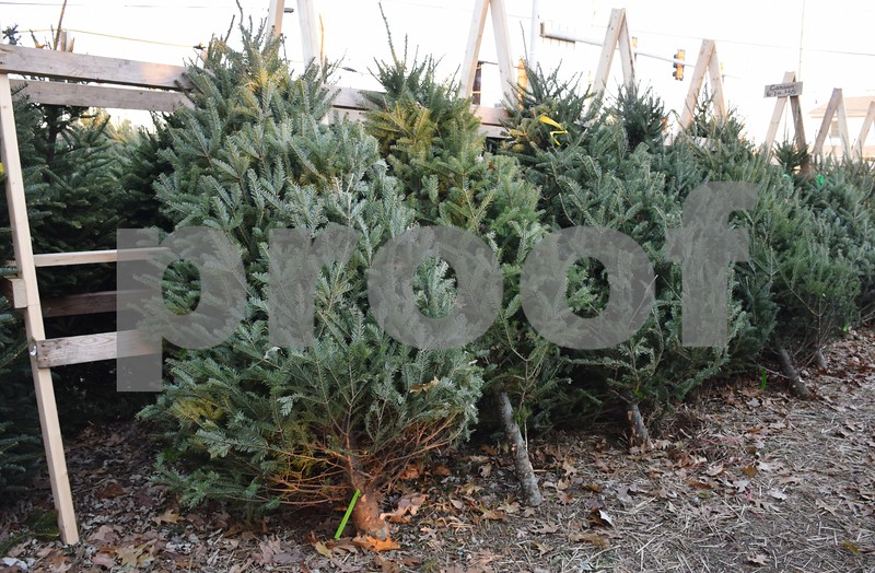 Rob Wessels, owner of Wessels Family Farm Christmas Tree Lot (pictured), said the national tree shortage has not affected his lot's Christmas trees or sales. Wessels gets his trees from a farm in Wisconsin.